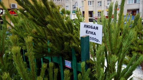 Инструкция РИА «Воронеж». Как выбрать живую новогоднюю елку