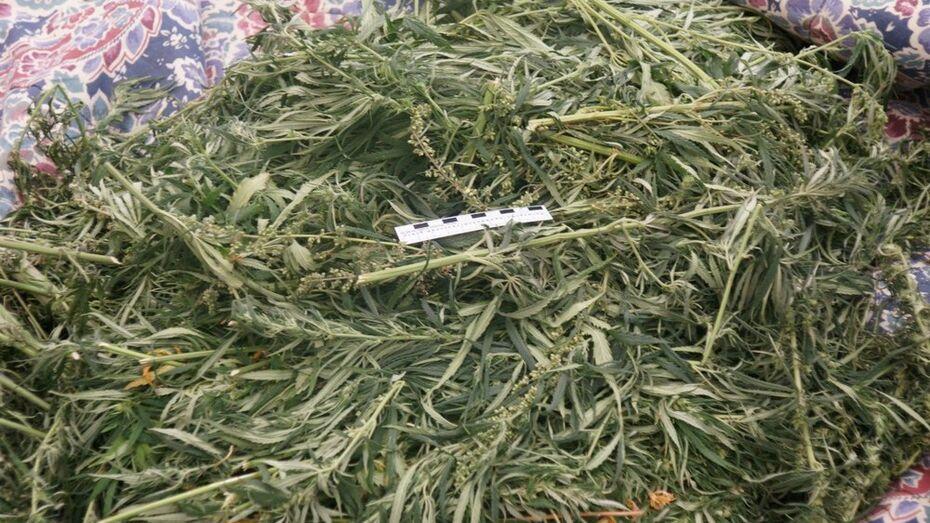Эртильские полицейские изъяли у местного жителя крупную партию марихуаны