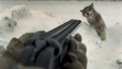 Жители Воронежской области в праздничные дни 61 раз нарушили правила охоты