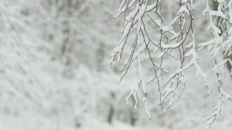 В первые дни апреля в Воронежском заповеднике выпало рекордное с 1932 года количество снега