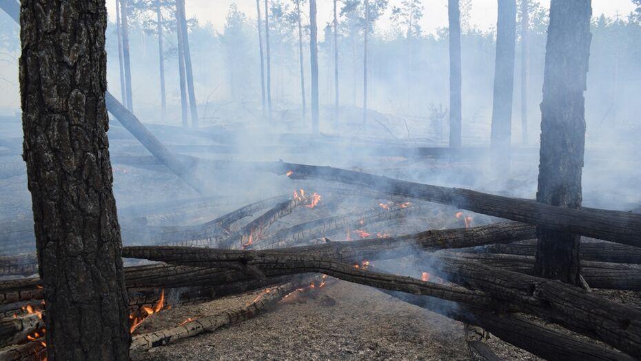 В Борисоглебске сгорело около 7 тыс кв. м леса