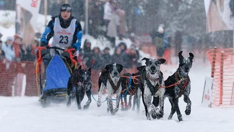 Воронежские собачьи упряжки отправятся на гонки в Карелию