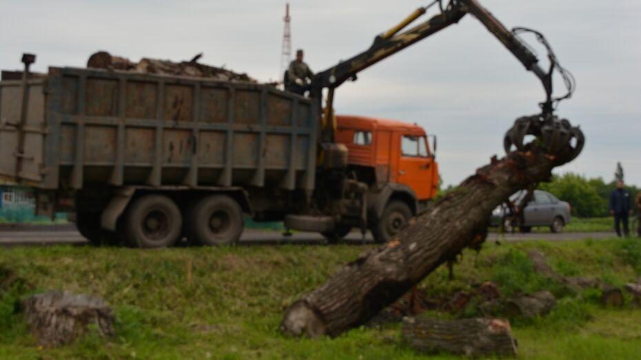 В нижнедевицком селе зону электролинии очистили от древесины