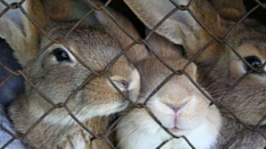 В Грибановском районе неизвестное животное уничтожает на подворьях местных жителей кроликов и домашнюю птицу