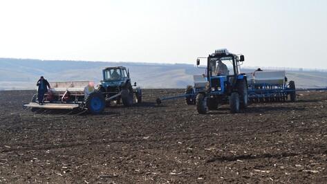 В Репьевском районе завершился сев большинства сельскохозяйственных культур