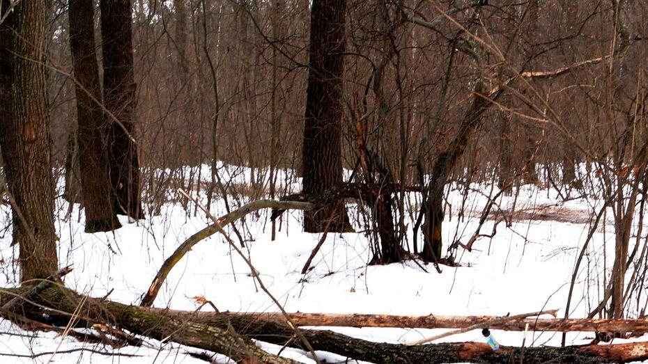 Многодетный воронежец сгорел в своем кроссовере в курском лесу