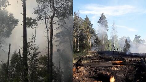 На месте пожара в Воронежском заповеднике нашли бутылку и зажигалку