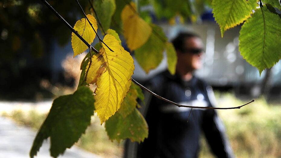 Метеорологи: осень 2020 года стала в Воронеже самой теплой в истории