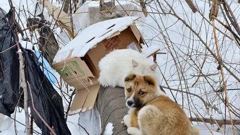 Воронеж присоединится к всероссийскому автопробегу в защиту бездомных животных