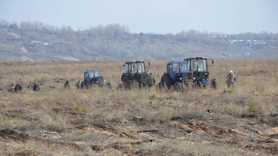 В Верхнемамонском районе началось восстановление леса на месте горельников