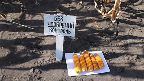 В Хохольском районе прошел областной сельскохозяйственный семинар по выращиванию кукурузы
