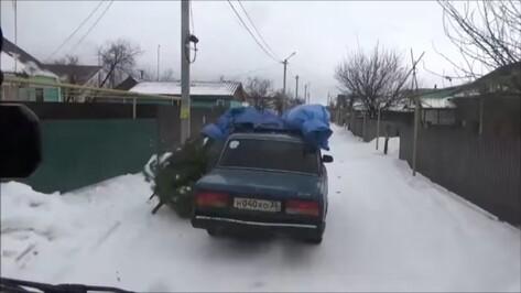 Под Воронежем полиция поймала попавшего на видео похитителя сосен