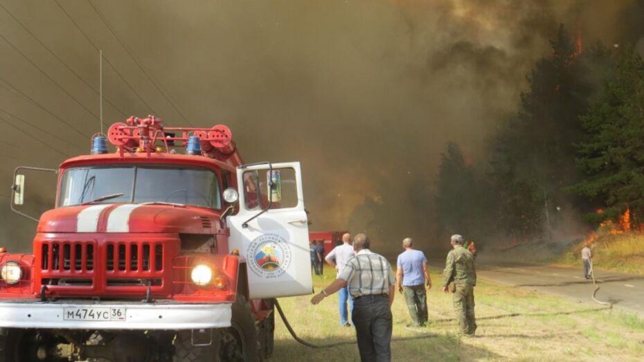 МЧС: в Воронежской области сгорело более 20 га лесной подстилки
