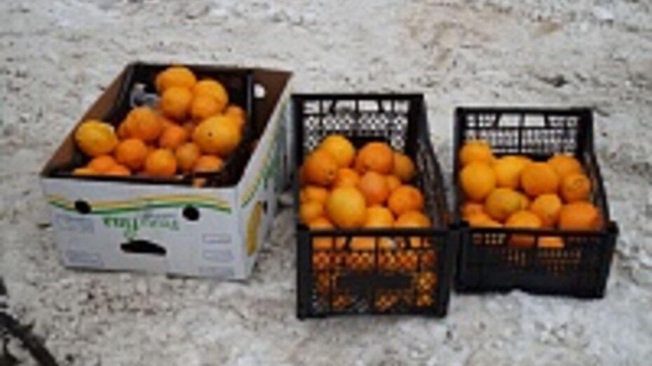 В Воронеже в 4,4 тоннах апельсинов нашли личинки мух