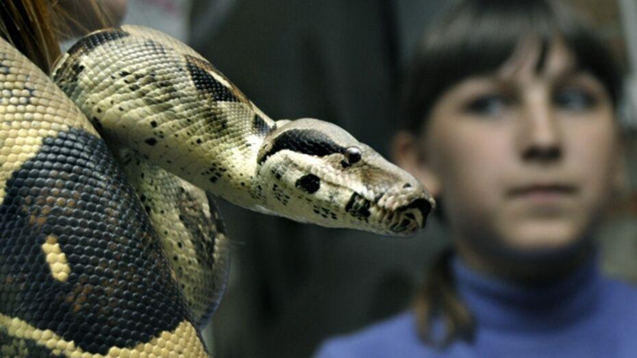 Перед Новым годом воронежцы заказывают змей из краснодарского питомника