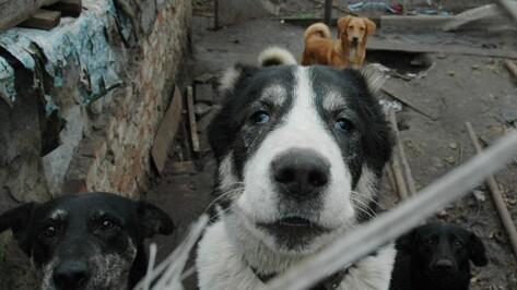 Многочисленные нарушения выявили в частном приюте для собак под Воронежем