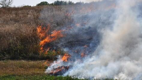 В Павловском районе за сутки произошел пожар и несколько травяных палов