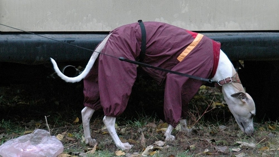 В Воронеже пройдет парад собак
