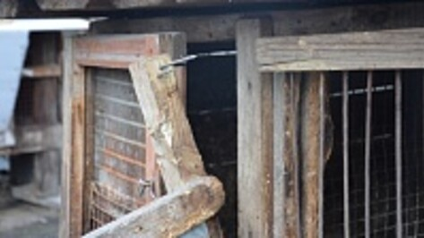 Журналисты РИА «Воронеж» разыскали человека, поймавшего «чупакабру» в капкан