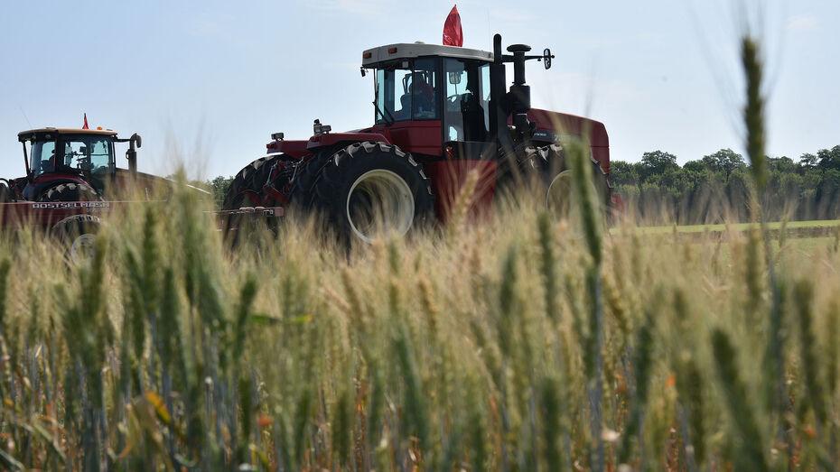 Второй миллион тонн зерна собрали в Воронежской области