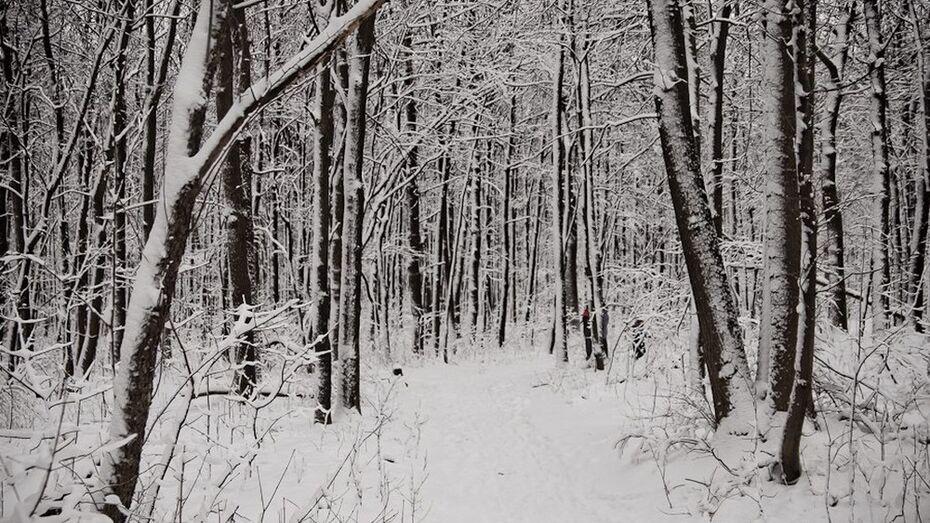 В Поворинском районе увеличат объем лесозаготовок