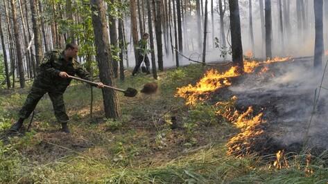 В Воронежской области лесные пожары ищут с помощью видеонаблюдения и спутниковых систем