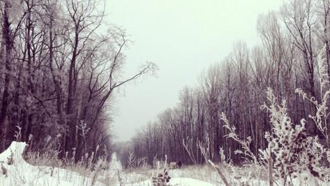 Синоптики спрогнозировали самую холодную зиму в Воронеже за последние 15 лет