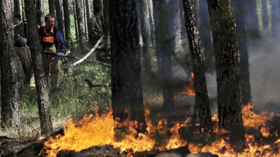 Воронежские лесники проложат 167 противопожарных маршрутов