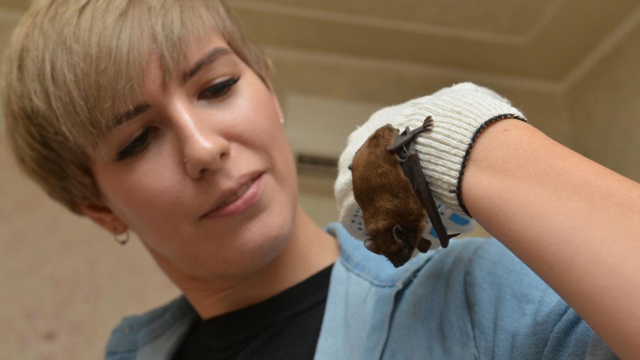 Люди Воронежа. Как биолог Елена Шерстяных создала приют для летучих мышей