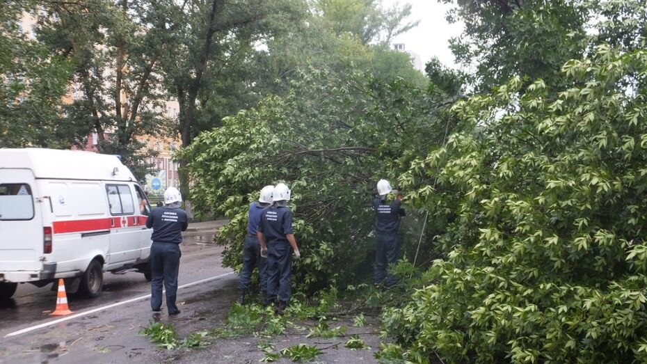 В Воронеже спасатели получили от горожан 17 заявок об упавших деревьях за день