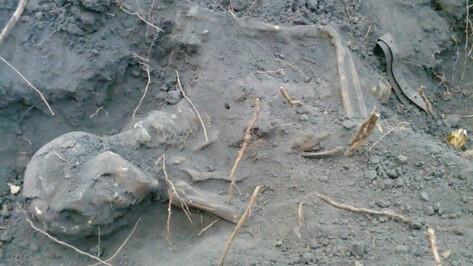 На границе воронежского Центрального парка нашли останки 2 красноармейцев