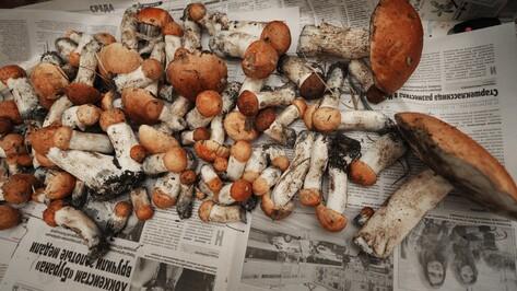 Полсотни за неделю. Воронежцы побили осенние рекорды отравлений грибами