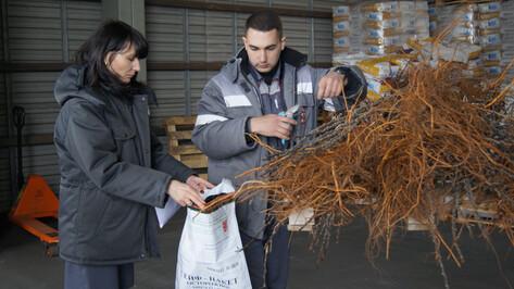 В Воронежскую область для нового сада завезли 100 тыс саженцев яблони из Польши