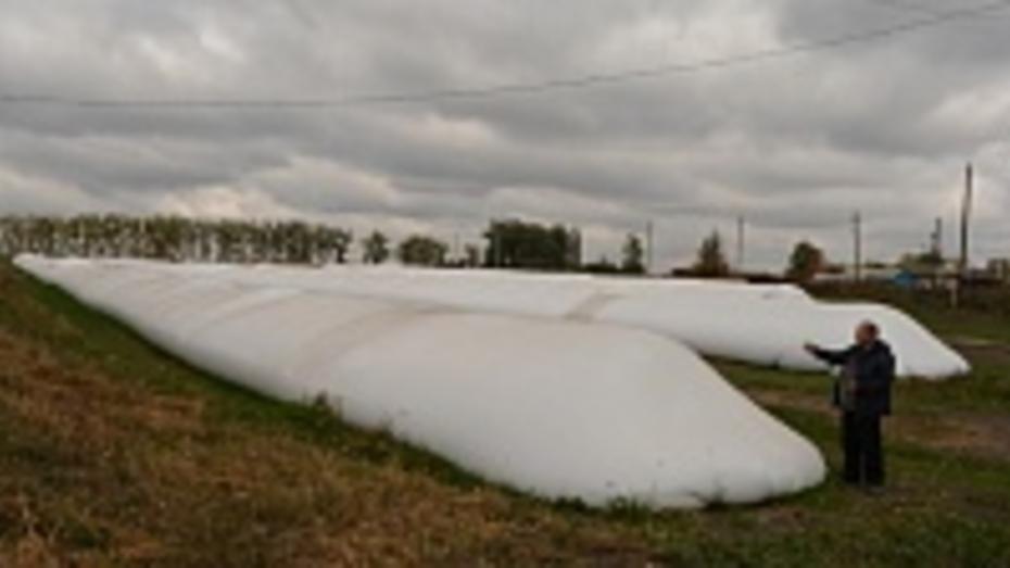 Нижнедевицкое сельхозпредприятие будет всю зиму хранить пшеницу  в «рукавах»