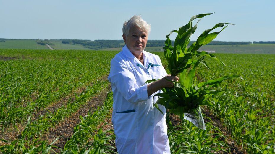 В Нижнедевицком районе посевы впервые проверят на содержание ГМО