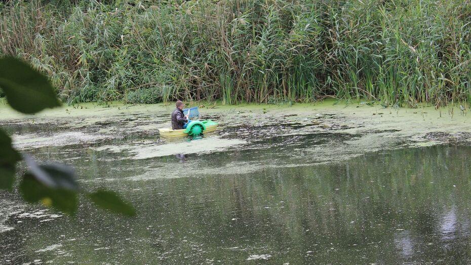 В ольховатской реке Черная Калитва массово погибла рыба