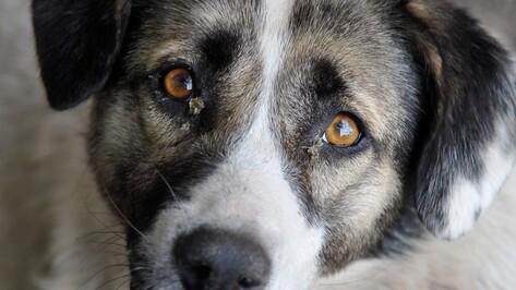 «ВКонтакте» разблокировал группу воронежского приюта для собак «Дора»