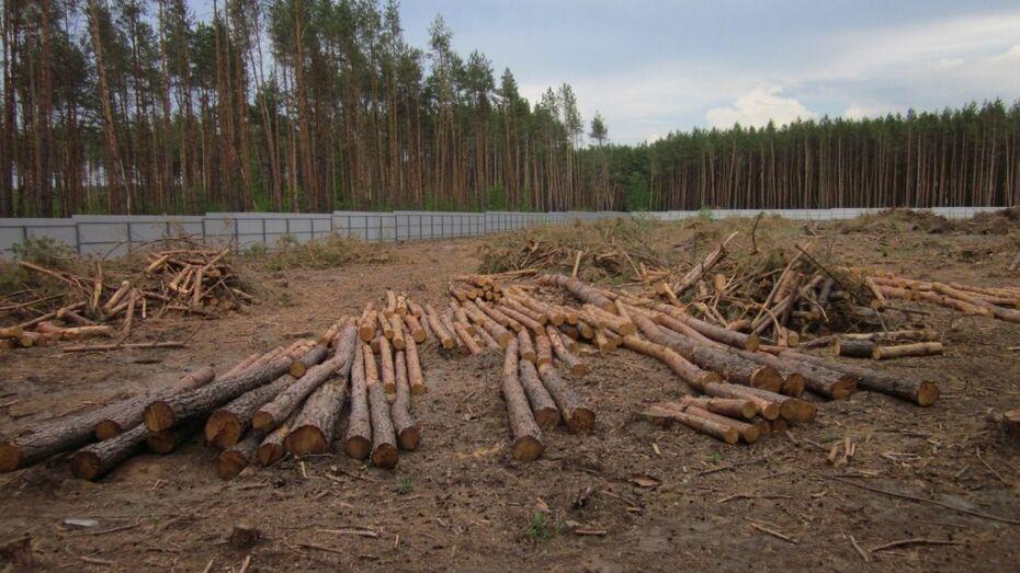 Губернатор обратил внимание прокуратуры на вырубку леса в воронежском микрорайоне