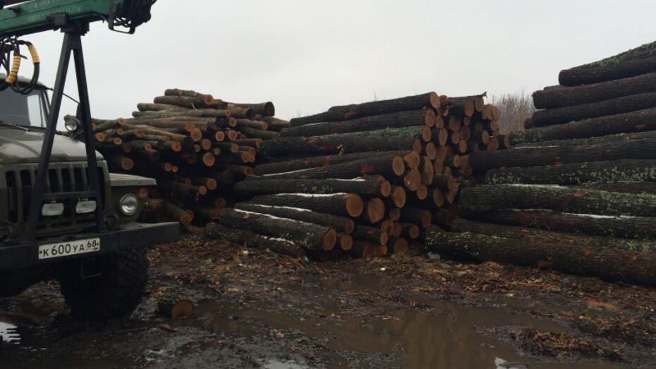 В Воронежской области 3 дровосека отправятся в колонию за вырубку 150 дубов
