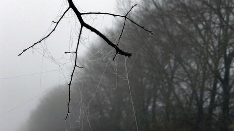 Плюсовая температура вернется в Воронеж в выходные