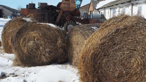 Фермеры Воронежской области за год получили 49 млн рублей в рамках нацпроекта