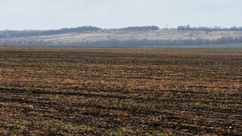 В Воронежской области засеяли 32% сельскохозяйственных земель