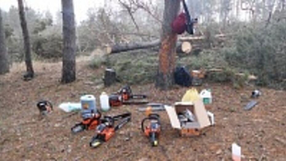 В Воронеже возбуждено уголовное дело по факту вырубки деревьев на улице Антонова-Овсеенко