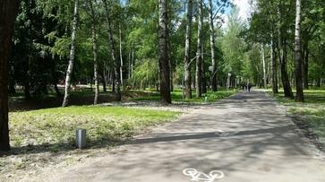 Активисты позвали воронежцев на проектирование велодорожек в парке «Динамо»