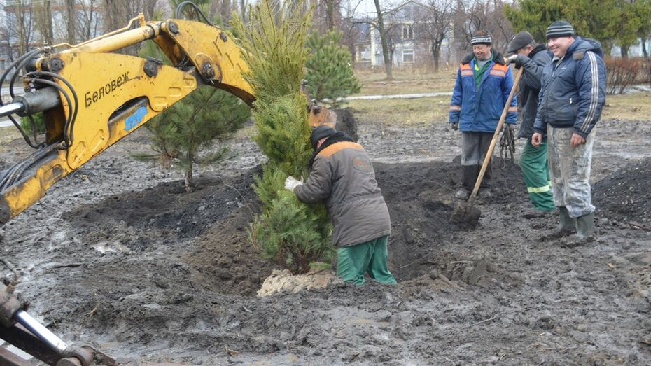 В Подгоренском районе приступили к озеленению населенных пунктов