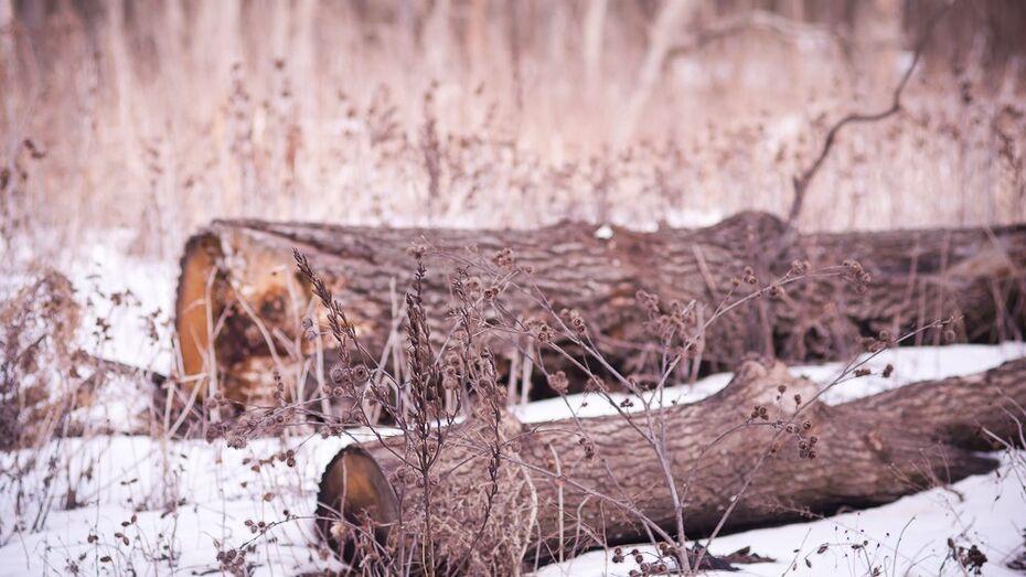 В Воронеже неизвестные вырубили деревья на полмиллиона рублей
