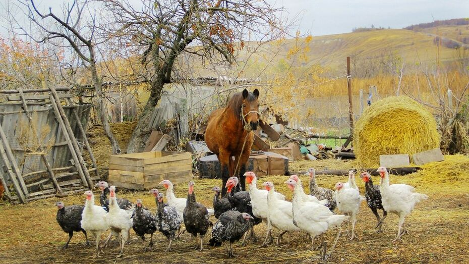 Воронежская область получит 66,4 млн рублей на развитие семейных ферм