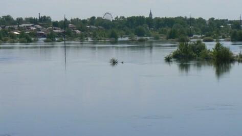 Эксперты: временный мост через реку Ворона в Борисоглебском районе может быть затоплен во время половодья