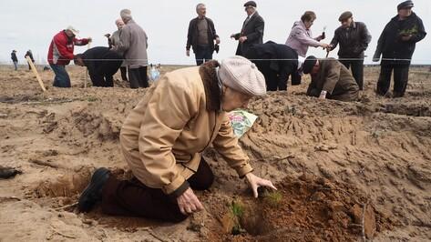 Под Воронежем 12 тыс деревьев составили надпись «70 лет Победы»