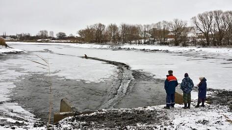 В Воронежской области из-за осушения прудов массово погибла рыба